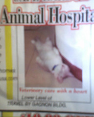 Worst Animal Hospital Ever