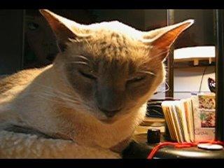 Narcoleptic Cat