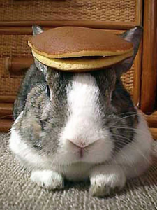 a rabbit with 2 pancakes on its head